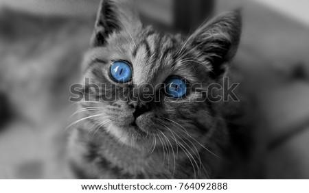 black and white cute cat . close up cat