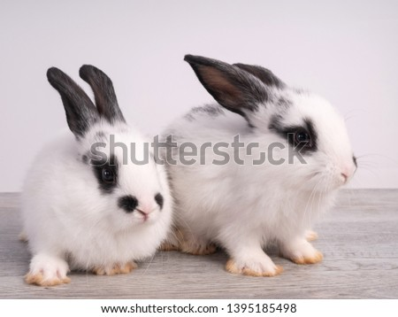 Black and white cute rabbit on wood table. White and black dot on face rabbit.