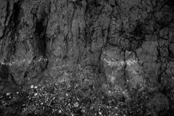 Black and white dirt texture