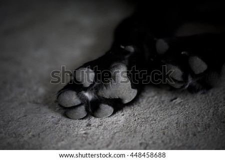 Stock Photo Black and white dog paw pads. Close-up view.