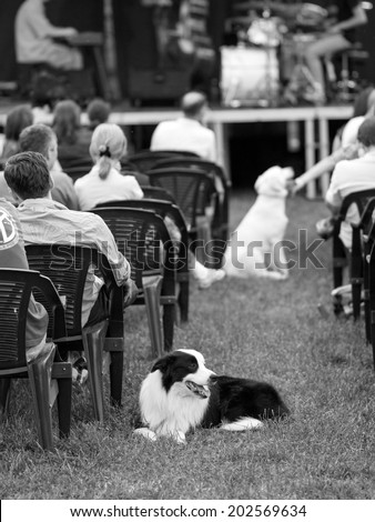 Black and white dogs and people sitting at a concert