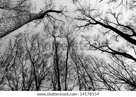Black and white empty forest growing to the sky