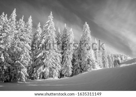 Black and white empty ski slope in Postavaru Massif Zdjęcia stock ©