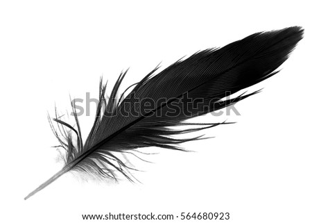 black and white feather #564680923
