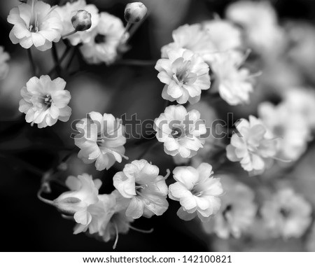 black and white flowers, baby\'s breath