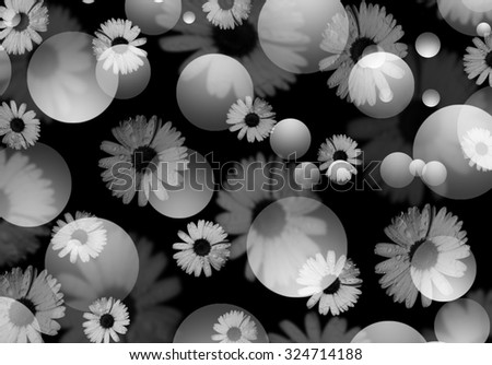 Black and white flowers. Daisy Chamomile flowers with water drops on black background. Black white abstract background with defocused daisies and bokeh. Beautiful blurred black and white background.