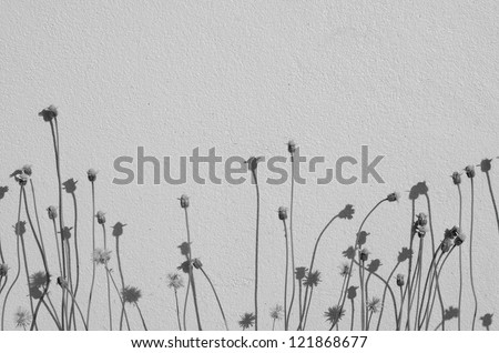 Black and white flowers on the wall