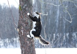 Black and white fluffy young cat climbing on a tree in winter park.