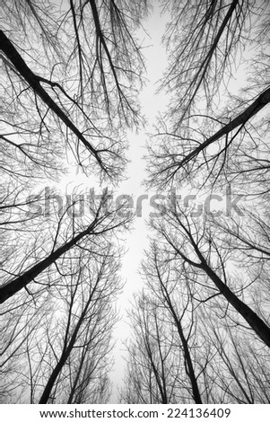 Black and white forest of trees photographed from below - the effect abstract