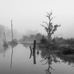Black and white, Forest swamp scene