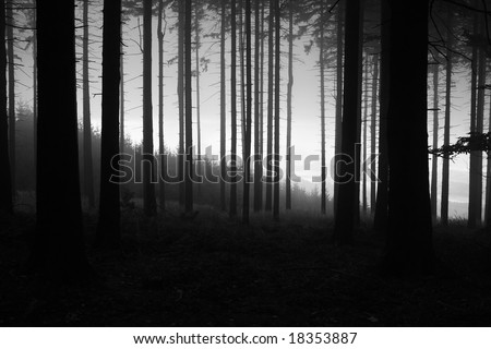 black and white forest with fog