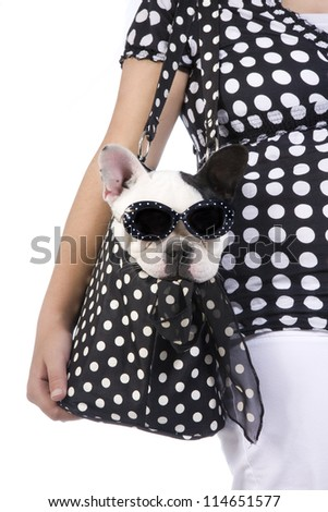 Black and white French bulldog wearing fashion sunglasses puppy in purse carried by girl in black and white polka dots isolated on white background
