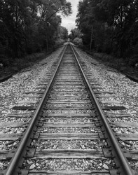 black and white gray scale rail road train road surrounded by tress