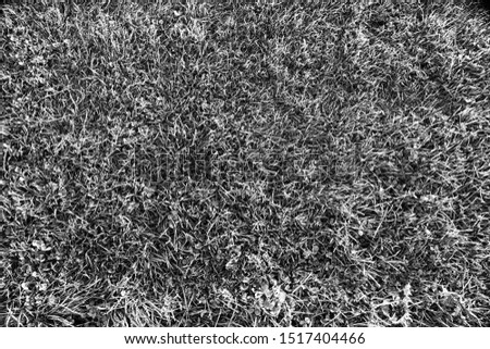 Black and white grey scale grass patterned texture