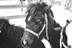 Black and white horse animal