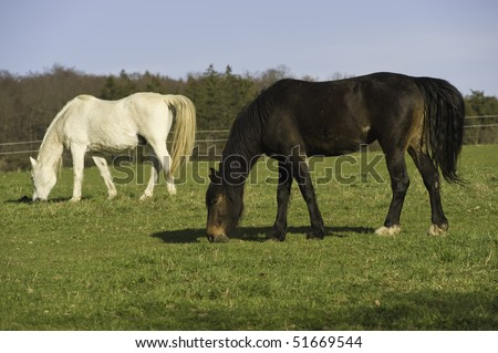 White horse eating grass - photo#28