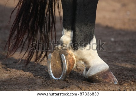 Black and white horse hoofs with horseshoe - stock photo