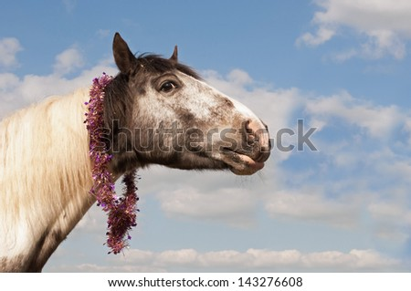 Black and white horse wearing a tinsel scarf