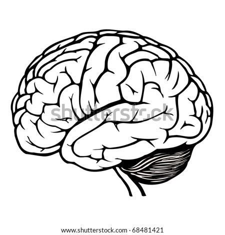 black and white human brain. jpg