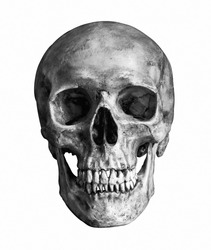 Black and White Human skull, isolated on white background with clipping path
