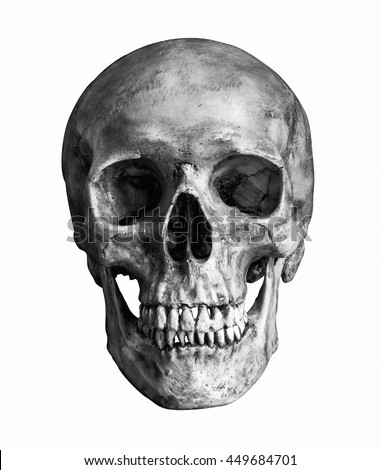 free stock photos of skull · pexels, Human Body