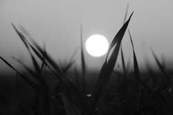 Black and white image of a white ball in the entanglements of grass. Minimalism. Sunset in the grass without colors. Tired, sad nature. A ball of light falls into the blades of grass.