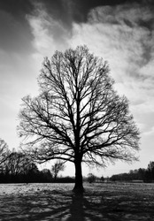 Black and white image of alone tree in winter