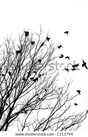 black and white tree photos. stock photo : Black and white
