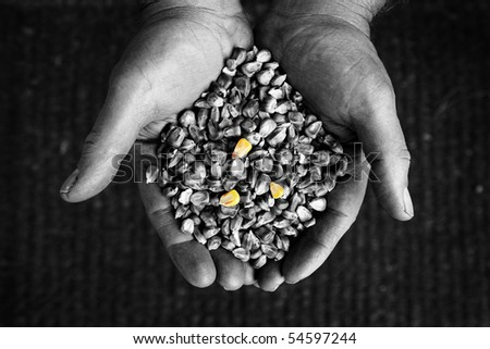 Black and white image of hands holding corn
