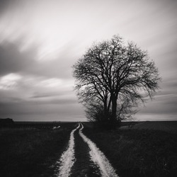 Black and white image of lonely tree in a field