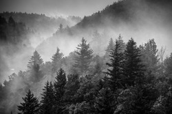 Black and white image of the clouds flowing through the pine trees along the Blue Ridge Parkway in Western North Carolina.