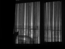 Black and white image of two cats on window behind curtain
