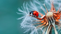 black and white insect, beautiful lady bird sitting in the flower, famous insect black and white