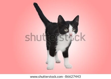 black and white kitten in front of a pink background