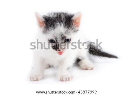 black and white kitten mewing