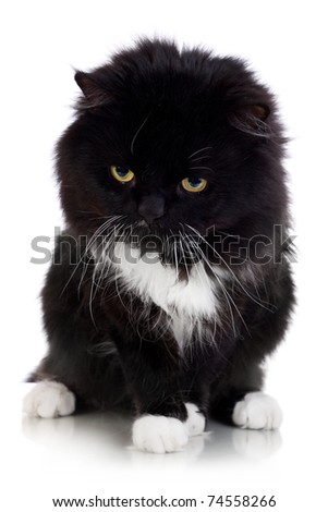 Black And White Kitten Sitting isolated on white