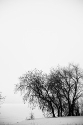 Black and white landscape, silhouettes of trees and branches against a background of white sky and snow. Film noise photography
