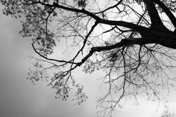 black and white leaf of tree