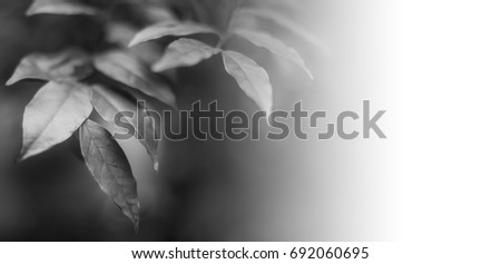 black and white leaves in natural light, Backgrounds #692060695