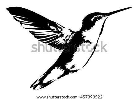 black and white linear paint draw hummingbird illustration