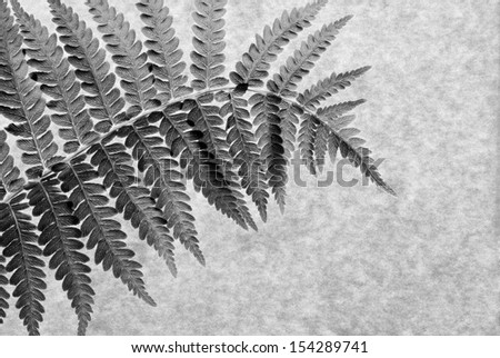 Black and white macro of real fern leaf on parchment paper. Back lighting shows texture and details.