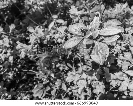 Black and white moody contrast blooming plants