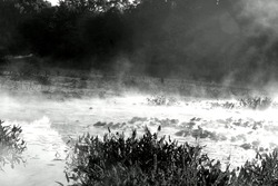 Black and white of a misty swamp in early morning