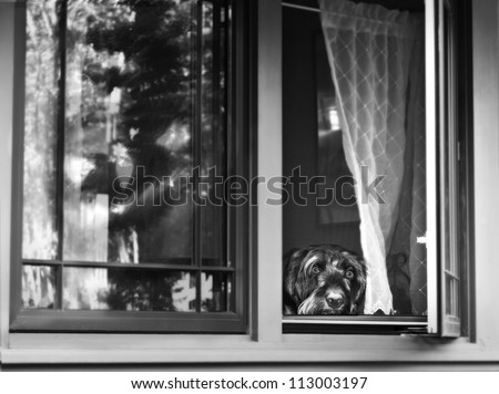 black and white of scared dog looking out of the window with scary Halloween reflection in the window