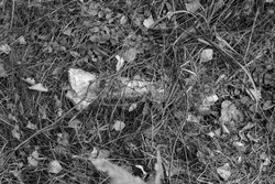 Black and white old bone in a grass