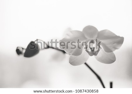 Black-and-white orchid flower close-up #1087430858