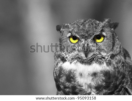 Black and white owl with yellow eyes