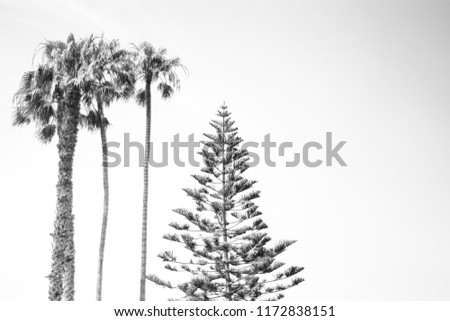 black and white palm tree and norfolk pine tree silhouette #1172838151
