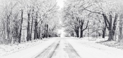 Black and white panorama of icy road with frost covered trees