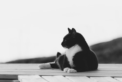 Black and white photo of a cat on a wooden platform